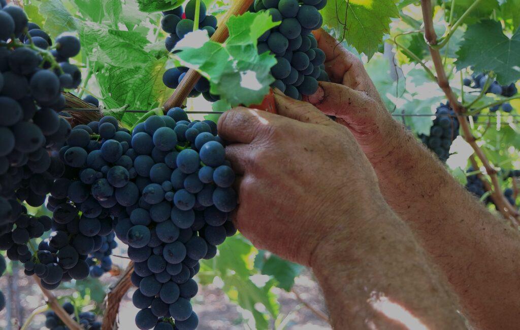 Copertina della campagna pubblicitaria dei vini Bellavite